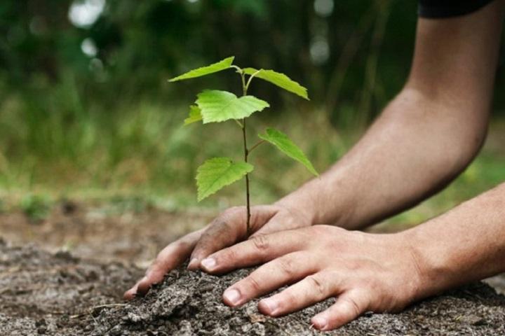 Planter des arbres grâce à Internet